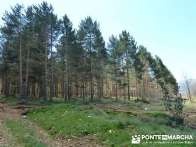 La pradera de la ermita de San Benito;rutas de montaña madrid;rutas de senderismo madrid